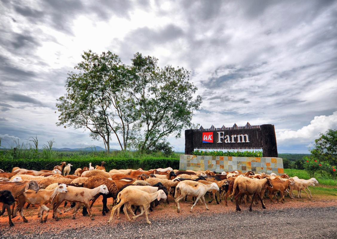 UK_Farm